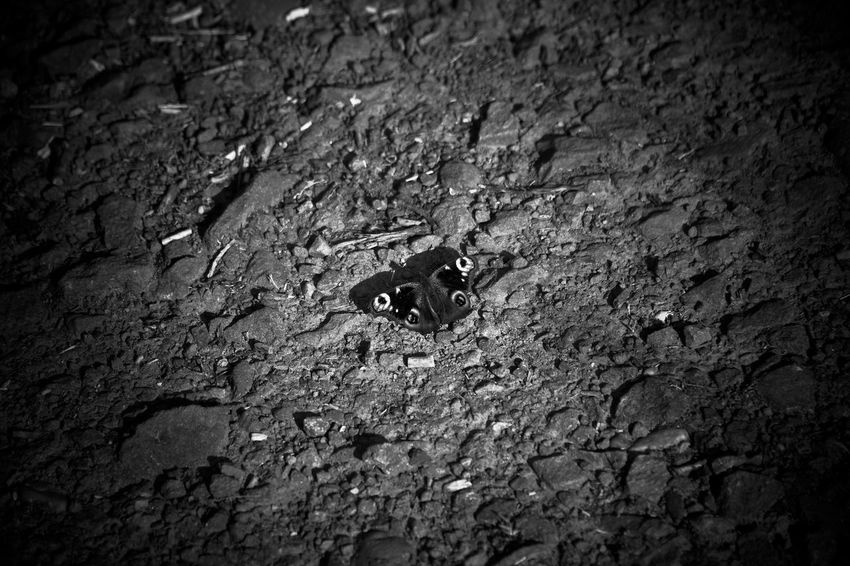 mono art Butterfly Ground Minimalism Monochrome Lucky's Monochrome Monoart Black & White Black And White Blackandwhite Photography Melancholy Light And Shadow Darkness And Light Tranquility Shootermag Mood Lucky's Mood Close-up Black And White Friday EyeEm Gallery Backgrounds