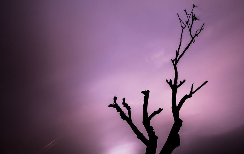 Nature Peace Tranquility Tree Unnatural Bare Tree Beauty In Nature Branch Close-up Day Dry Drying Lilac Long Exposure Nature Night No People Outdoors Purple Purple Sky Silhouette Sky Toxic Tranquility Violet