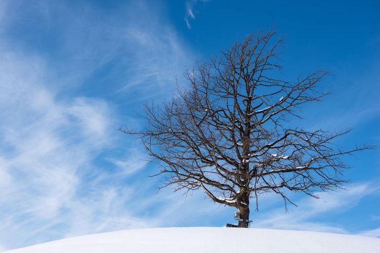 Bare tree against blue sky