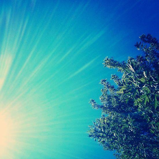 Enjoying the last few weeks of summer. Enjoying Life Eye4photography  Nature Sunshine