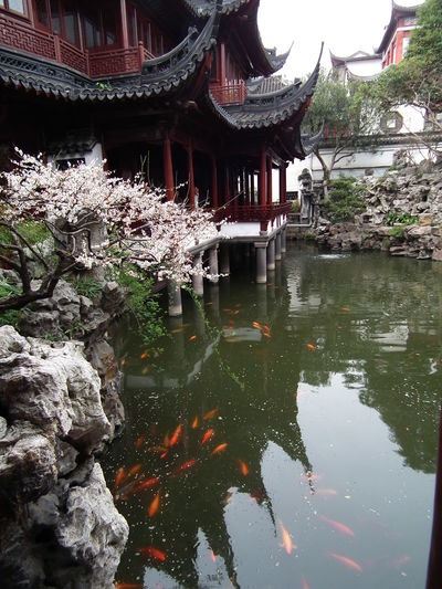 Architecture Koi No People Outdoors Reflection Shanghai, China Spring Flowers Tranquility Travel Destinations Travel Photography Traveling In China Water Yuyan Garden