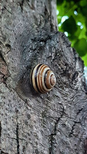 Gastropod Spiral Snail Close-up Animal Themes Wildlife