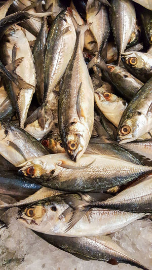 fresh mackerel in the market. Abundance Animal Body Part Animal Head  Animal Themes Choice Close-up Fish Fishing Food Food And Drink For Sale Freshness Full Frame Group Of Objects Healthy Eating Heap Large Group Of Objects Mackarel Market Messy Raw Retail  Sale Seafood Zoology