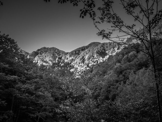 Beautiful mountain view in Hokkaido, Japan. Black and White image. Sounkyo Hokkaido Japan Mountain Wallpaper Backgrounds Ryusei Waterfall Kamikawa Tree Sky Plant Beauty In Nature Forest Land Outdoors Nature Black White Landscape Scenics Beautiful Contrast Daisetsuzan National Park