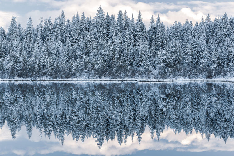 Lake Reflection Landscape Winter Sky Water Cold Temperature Forest