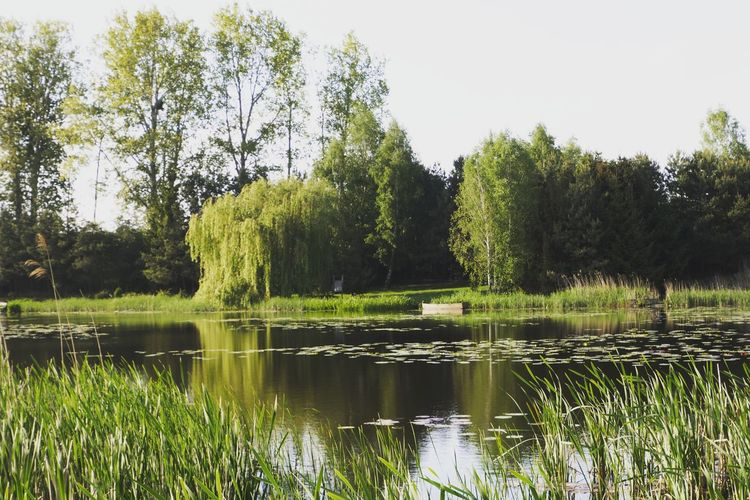 Tree Water Lake Reflection Sky Grass Green Color Countryside Non-urban Scene Tranquil Scene Calm Remote Idyllic Tranquility Greenery Green Lakeside