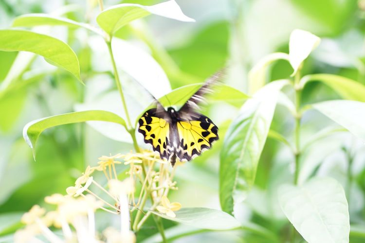 Perching Flower Defocused Full Length Spread Wings Leaf Butterfly - Insect Eating Branch Summer Animal Wing Flapping