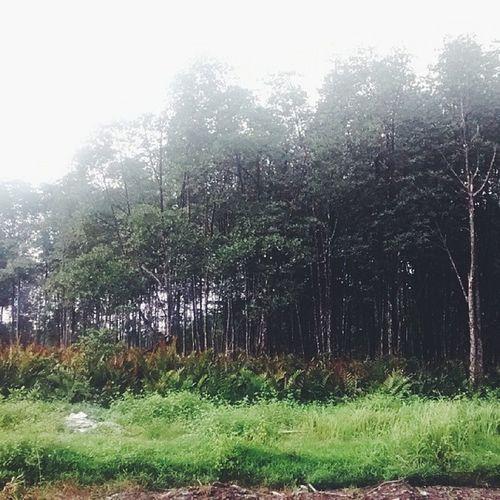 Kalau tak simpan demi anak cucu pun, simpanlah untuk kera-kera di hutanan. Lemparbalik Disinimerata Kuala Sepetang