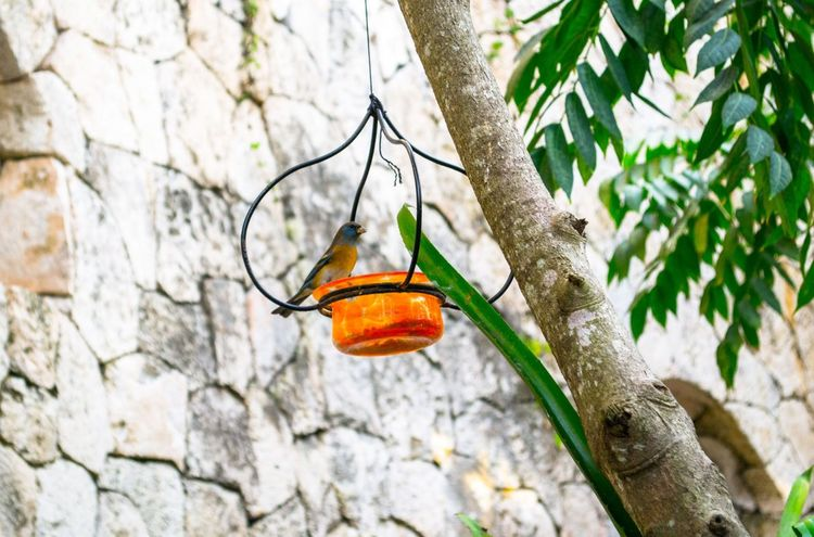 A bird Attraction In Mexico Authentic Mexican Food Bird Friendlylocalguides Holidays Mexico National Landmark Park Pyramid Things To Do Vacation What To See In Mexico Where To Go Xcaret