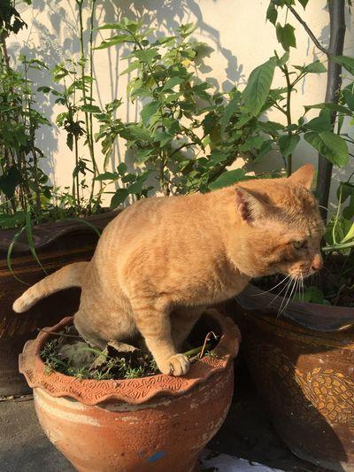 Cat sitting in a flower pot