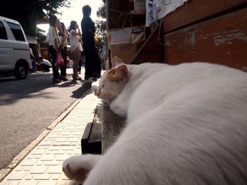 湯布院にいた大物 猫 Cat
