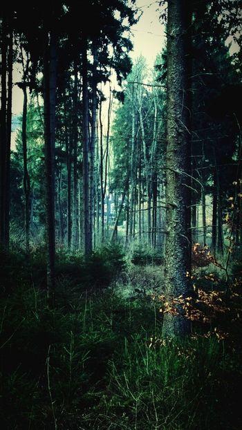 Woods Fairytale  Magic Mystery Miles Away
