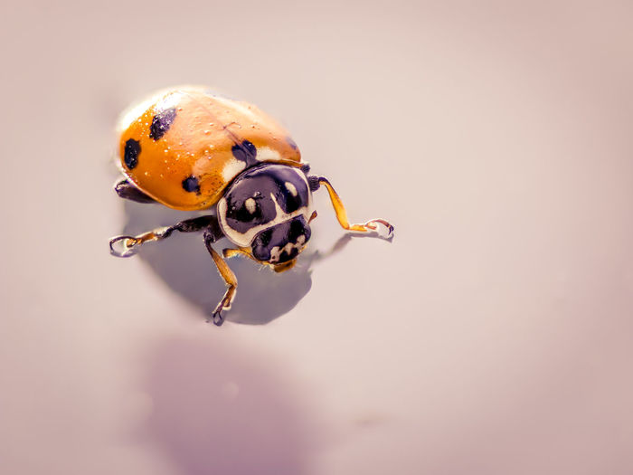Macro Photography Animal Themes Close-up Day Insect Ladybug Macro Nature No People One Animal Outdoors