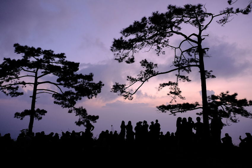 Beauty In Nature Cloud - Sky Day Forest Growth Landscape Leisure Activity Lifestyles Low Angle View Men Nature Outdoors People Real People Scenics Silhouette Sky Sunset Togetherness Tranquility Tree