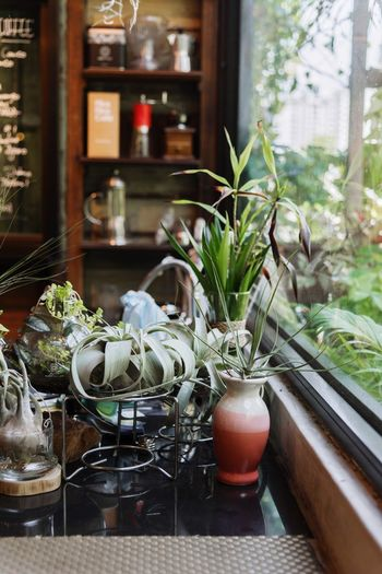 Plants Plant Window Potted Plant No People Glass - Material Indoors  Growth Nature Green Color Transparent Table Close-up Focus On Foreground Day Decoration Window Sill Leaf Container Plant Part Houseplant