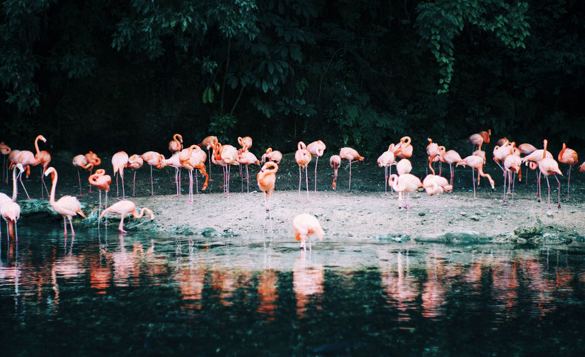 80s Pink Animal Animal Themes Animal Wildlife Animals In The Wild Beauty In Nature Bird Day Flamingo Flock Of Birds Freshwater Bird Group Of Animals Lake Large Group Of Animals Nature No People Outdoors Pink Color Plant Reflection Tree Vertebrate Water Waterfront