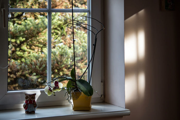 EyeEm Selects Window Interior House Garden Flowers Home Flower Tree Green Decoration View Kitchen White Architecture Wooden Glass Wood Pot Furniture Parlor Architectural Elements Indoors  No People Day Colour Your Horizn Indoors  Plant Table Home Interior