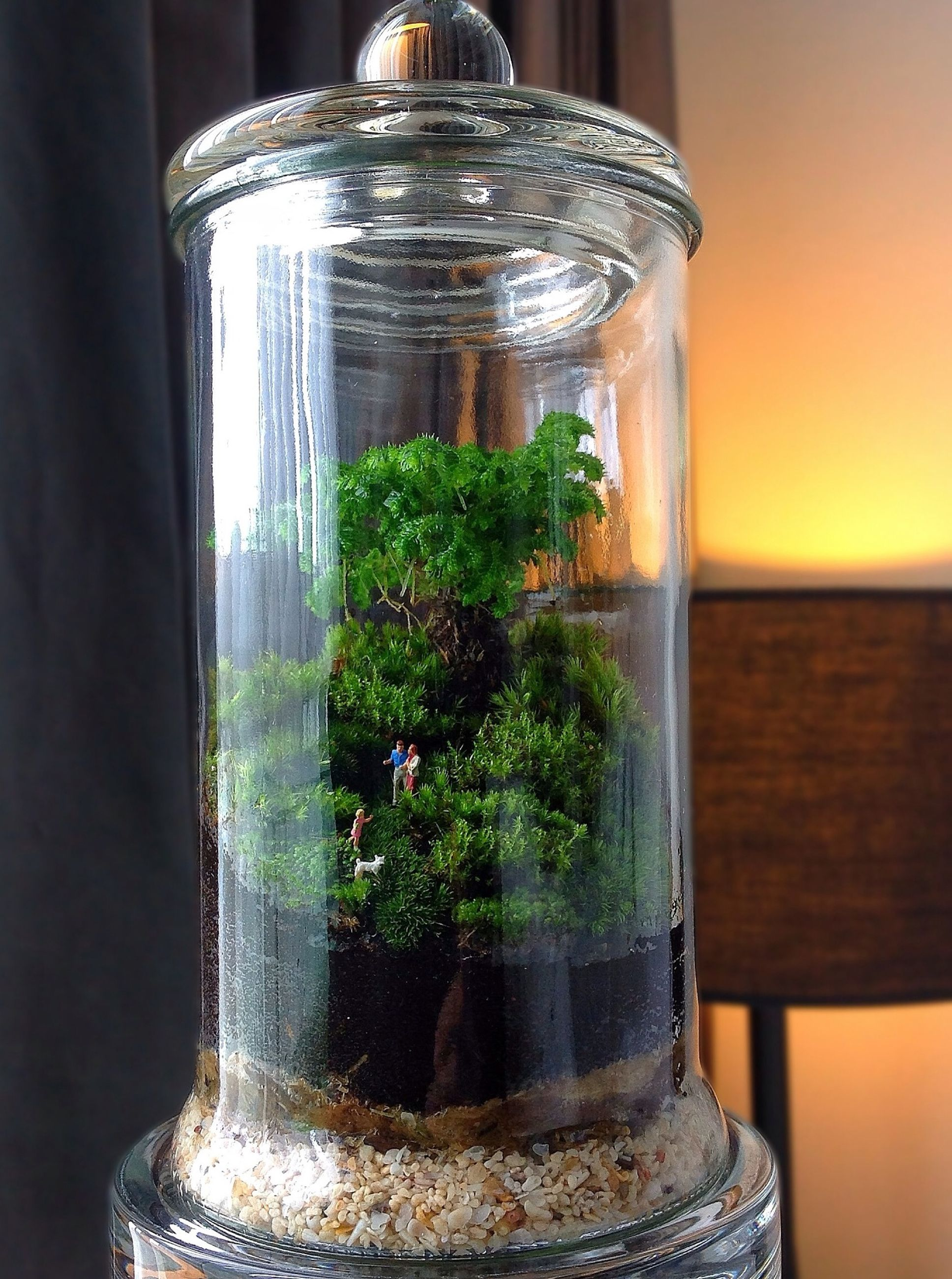 glass - material, growth, indoors, close-up, transparent, plant, focus on foreground, potted plant, green color, window, no people, water, wood - material, nature, flower, day, built structure, vase, home interior, fragility