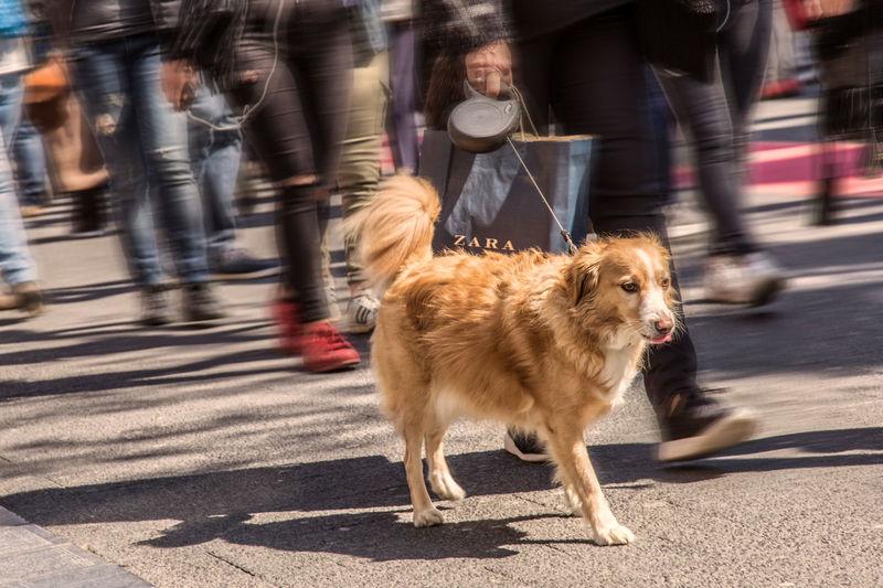 City City Life City Street Dog Leisure Activity Lifestyles Motion Outdoors Pets Road Shopping Street Zara