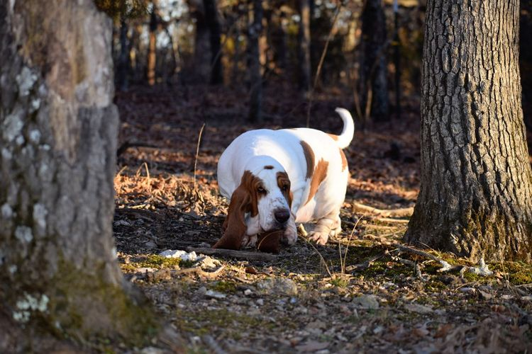 View of dog on field by tree trunk