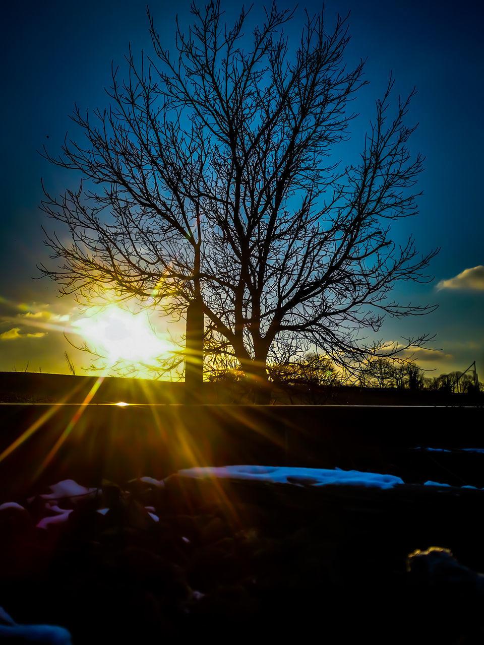 SILHOUETTE BARE TREE AGAINST BRIGHT SUN