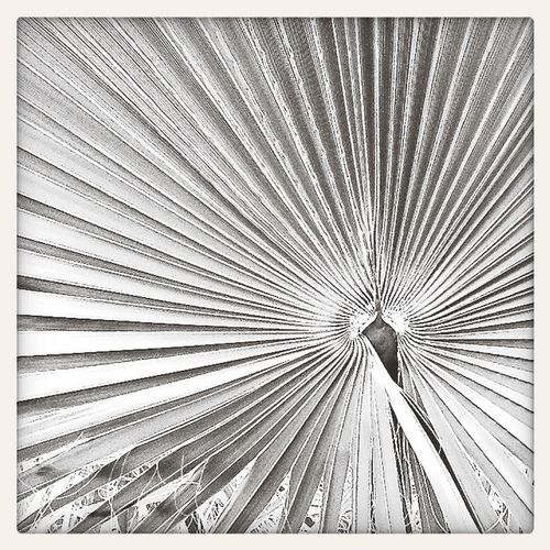 Royal Palm Dreaming