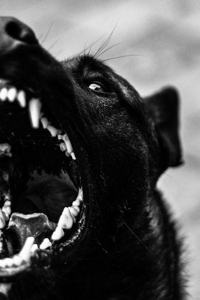 Remy. Dog Hond Animal Dier Animals Dieren First Eyeem Photo
