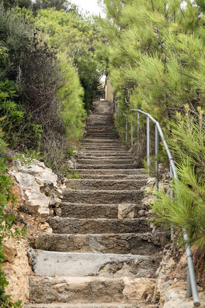 Stairway Steps Built Structure Day Direction Footpath Green Color Growth Land Nature No People Outdoors Solid Staircase Steps And Staircases The Way Forward Tranquility Tree