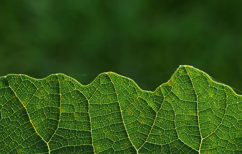 Close-up of wet leaves