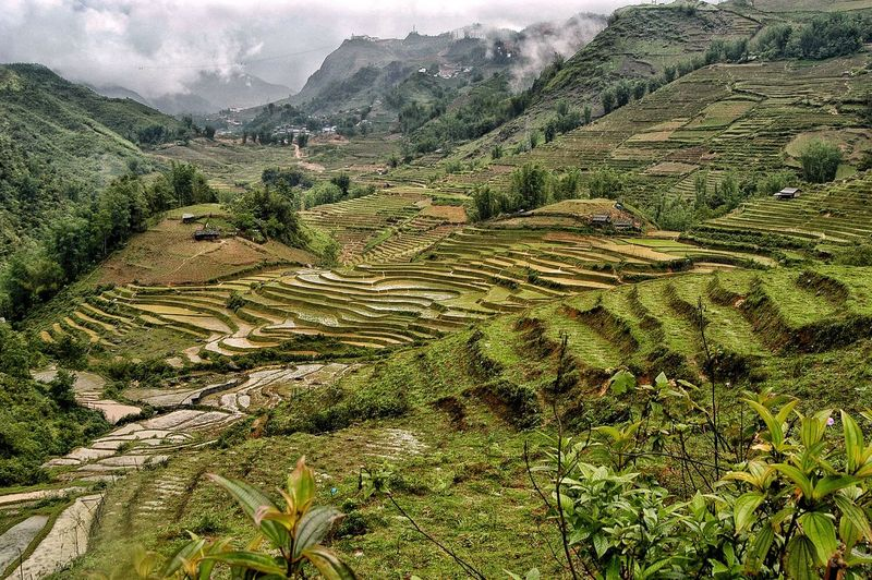 Vietnam — Sapa Plant Agriculture Landscape Growth Scenics - Nature Environment Land Tranquility Beauty In Nature Tranquil Scene Green Color Nature Field Rural Scene Farm Day Crop  High Angle View No People Outdoors