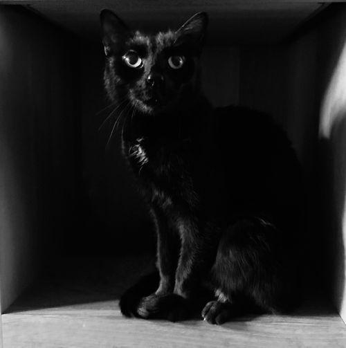 Kat zittend in Kast . Cat sitting in Cupboard .