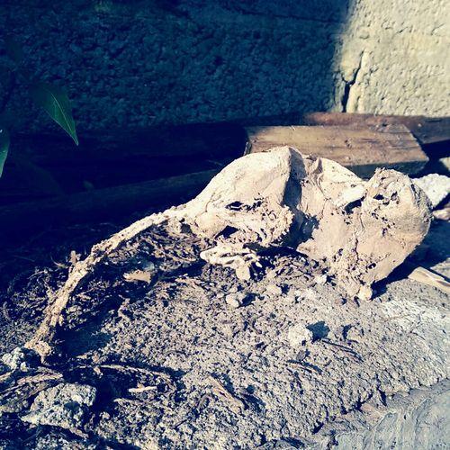 I found a dead rat.... One mumy rat! Lol Dead Rat Mort Rat