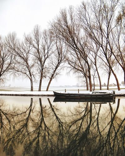 Bare Tree Tranquility Water Lake Cold Temperature No People Outdoors Beauty In Nature