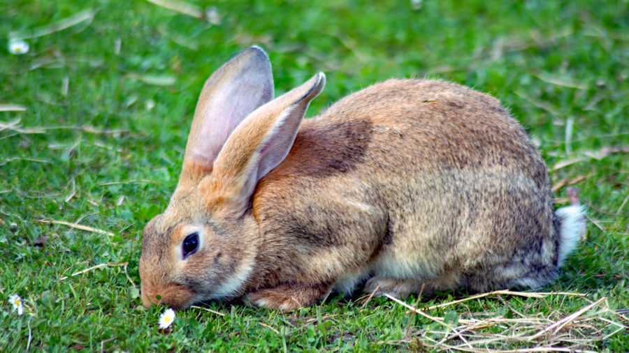 Animal Themes Animals In The Wild Antler Day Domestic Animals Field Grass Mammal Nature No People One Animal Outdoors Rabbit Rabbit 🐇