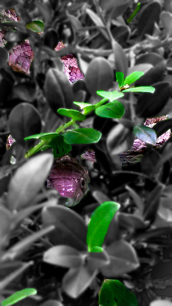 silently he awaits. Oaksnake Snake Hidden Leaf Purple Growth Full Frame Nature Outdoors