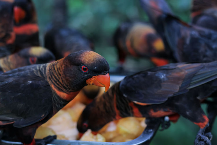 Close-up of pigeons feeding