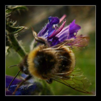 Una de las especies más valiosa del mundo!, … sabías que, más de un cuarto de millón de plantas florales dependen de las abejas. Naturaleza Fotosdesomni Instadaily Instanature igersplanet worldcaptures ig_captures mtgelite igerscatalonia flowerpower