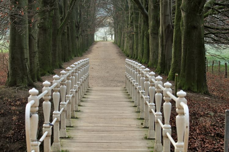 Empty Narrow Pathway Along Trees In Forest