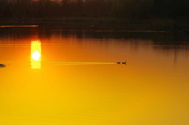 日落 余晖 Sunset Reflection Nautical Vessel Yellow Water Lake Kayak Outdoors Oar Transportation Silhouette Tranquility Rowboat Nature One Person Adult Rowing Day