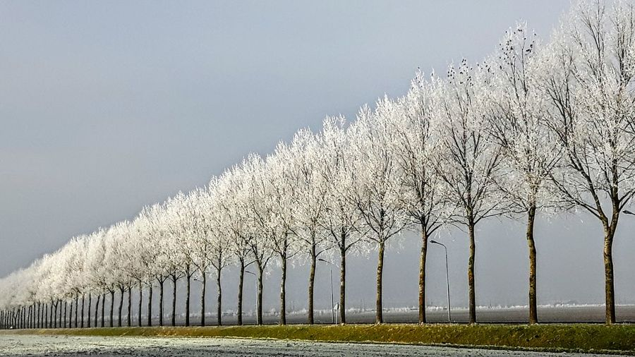 weather Nature Outdoors Tree Cold Temperature Holland Whitetrees Whitetree And White Sky😳😎