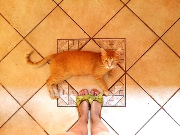 Cat Ginger Cat Feet Sandals Everyday Life View From Above