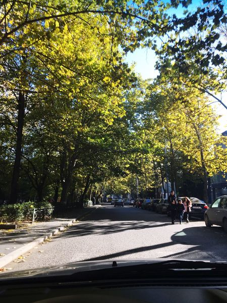 Tree Travel Road Car Autumn Autumn Colors Blur Sky Yellow Day Day People Nature Adult The Way Forward