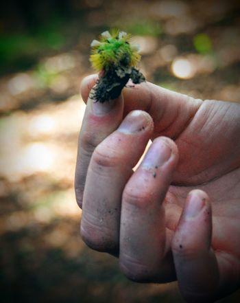 Nature Hand Human Body Part