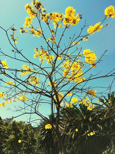 Plant Sky Growth Low Angle View Beauty In Nature Tree Nature Yellow Flowering Plant