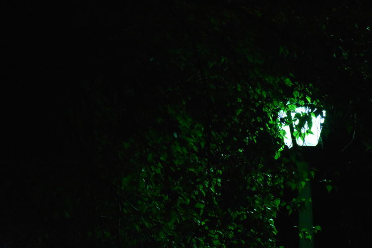 Lamp Post Light Beauty In Nature Copy Space Creepy Dark darkness and light Forest Green Color Growth Haunted Idyllic Illuminated Land Nature Night No People Outdoors Plant Scenics - Nature Spooky Through Trees Tranquil Scene Tranquility Tree