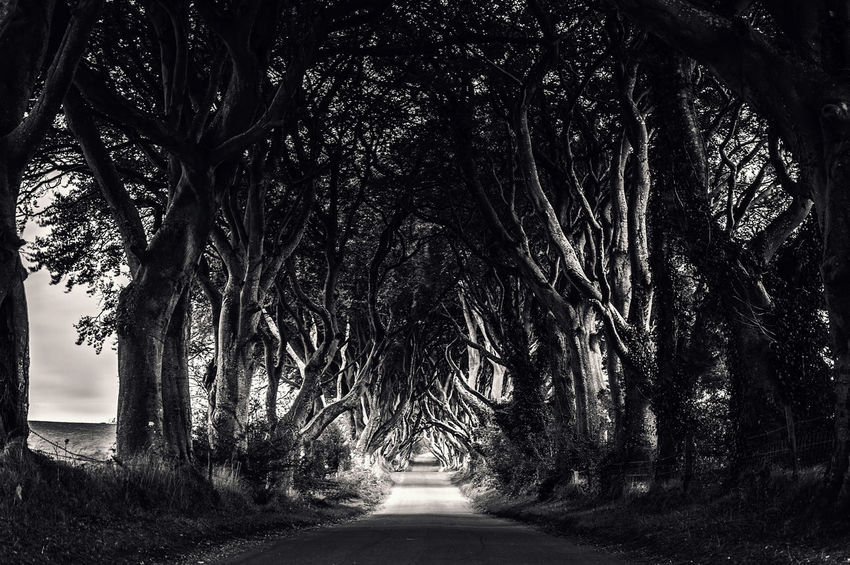 Dark hedges in County Antrim featured in game of thrones series