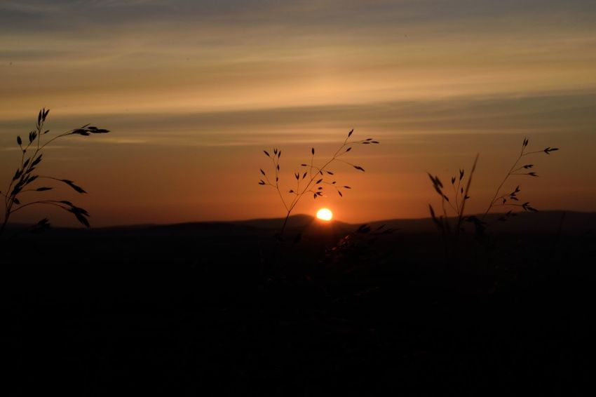 Animal Themes Animals In The Wild Beauty In Nature Bird Dusk Flock Of Birds Flying Growth Landscape Large Group Of Animals Nature No People Orange Color Orange Sky Outdoors Scenics Silhouette Sky Sun Sunset Tranquil Scene Tranquility Tree