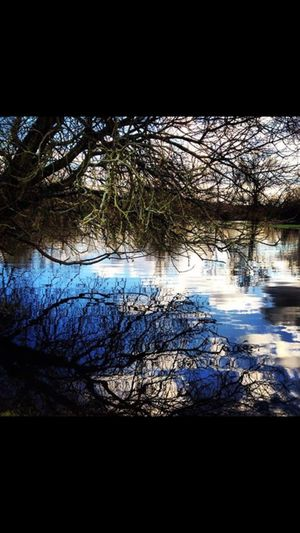 Outside Photography Nature Nature Photography Countryside Colours Of Nature Beautiful Nature Water Wiltshire UK Water Meadow Rivers Floods Reflections Reflections In The Water Trees Trees And Water Trees And Reflections