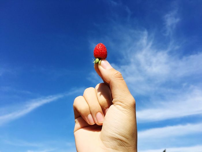 Cropped person holding strawberry against blue sky