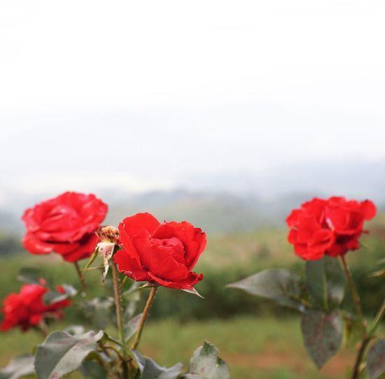 Rosé Beauty In